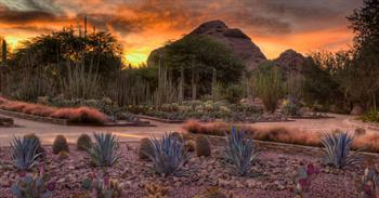 Botanic Garden Phoenix